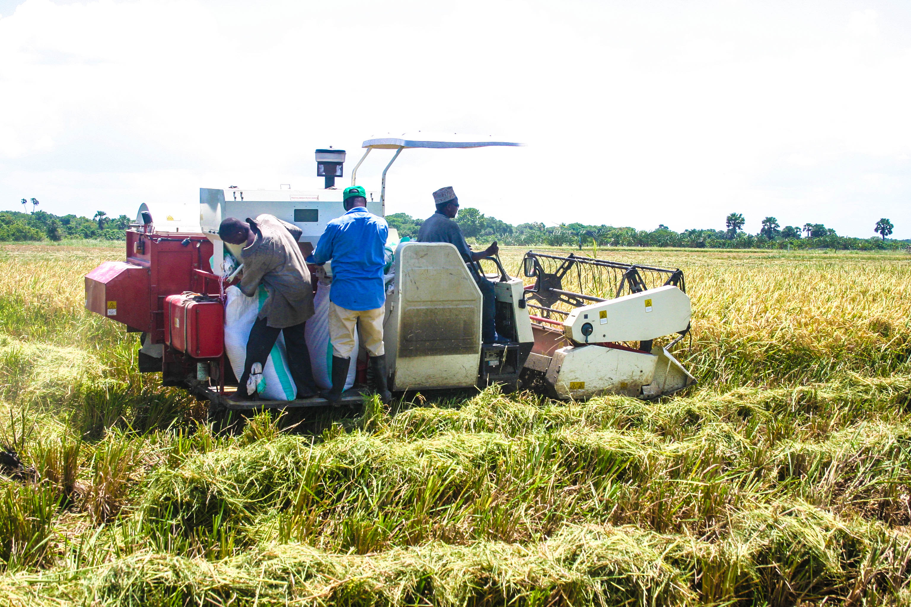 Competitive African Rice Initiative -Phase II